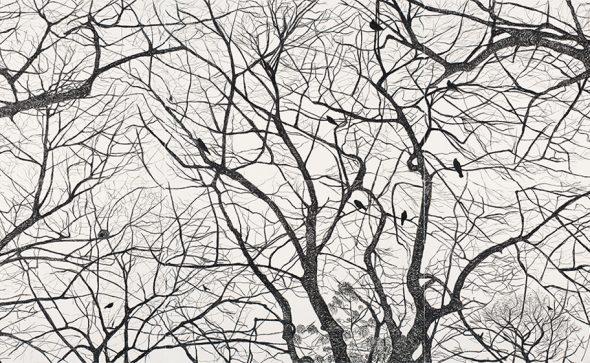 Viviana Blanco Sin titulo Políptico Carbonilla sobre papel 35 x 50 cm cada uno 2015